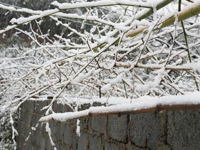 Tuyết rơi dày, phủ trắng Sa Pa