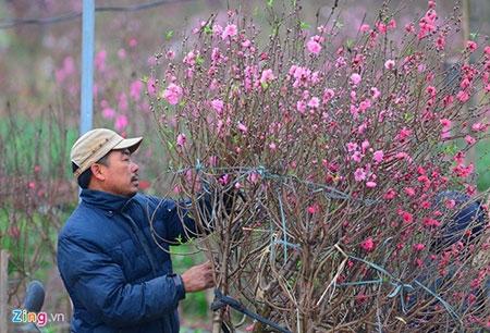 Đổ xô lên làng hoa nổi tiếng đất Hà thành gây tắc nghẽn - 7