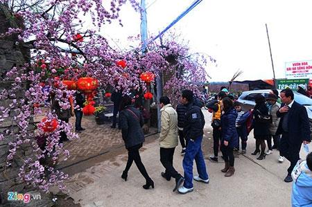 Đổ xô lên làng hoa nổi tiếng đất Hà thành gây tắc nghẽn - 8