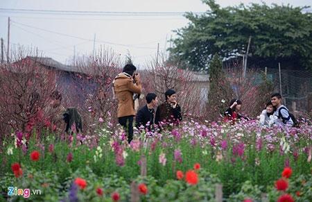 Đổ xô lên làng hoa nổi tiếng đất Hà thành gây tắc nghẽn - 10