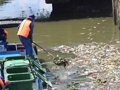 Cá lại chết dày đặc kênh Nhiêu Lộc - Thị Nghè