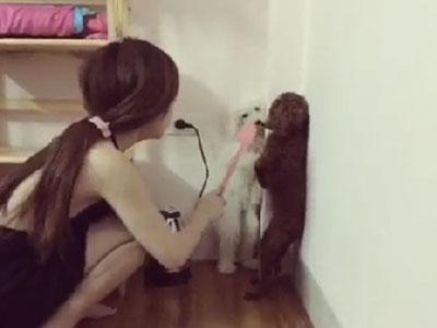 Clip siêu dễ thương: Cô gái phạt cún cưng gây sốt mạng xã hội