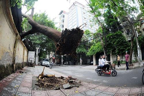 Hà Nội: Giông lốc, cây đổ vào trường học - 3