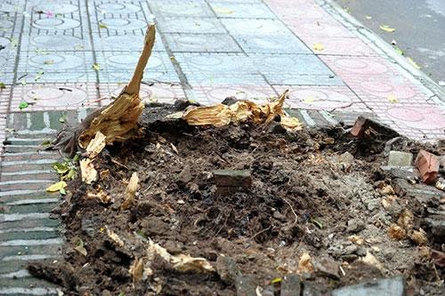 Hà Nội: Giông lốc, cây đổ vào trường học - 4