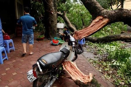 Hà Nội cấm đường, đóng cửa công viên sau trận cuồng phong - 5
