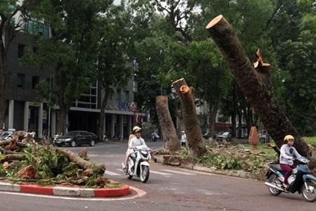 Hà Nội cấm đường, đóng cửa công viên sau trận cuồng phong - 16