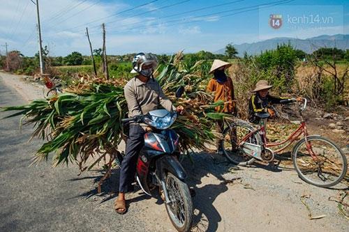 Ninh Thuận trong đợt hạn hán khốc liệt nhất thập kỷ: Những hình ảnh khiến ai cũng xót xa - 5
