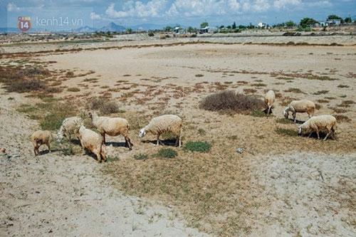 Ninh Thuận trong đợt hạn hán khốc liệt nhất thập kỷ: Những hình ảnh khiến ai cũng xót xa - 7