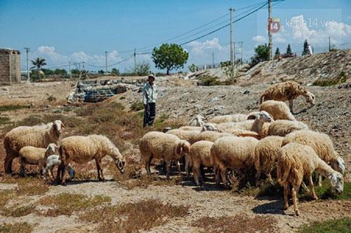 Ninh Thuận trong đợt hạn hán khốc liệt nhất thập kỷ: Những hình ảnh khiến ai cũng xót xa - 9