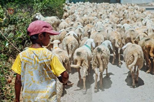 Ninh Thuận trong đợt hạn hán khốc liệt nhất thập kỷ: Những hình ảnh khiến ai cũng xót xa - 15
