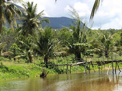 Chuyện rắn hổ có mào, trăn khổng lồ ở đảo ngọc Phú Quốc