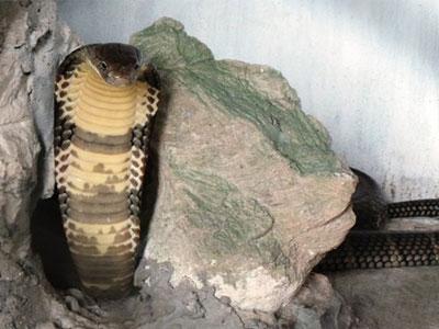 Loài rắn