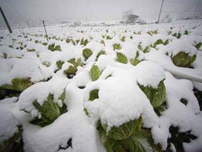Mỹ, Trung Quốc thiệt hại kinh tế đáng kể sau bão tuyết và giá rét