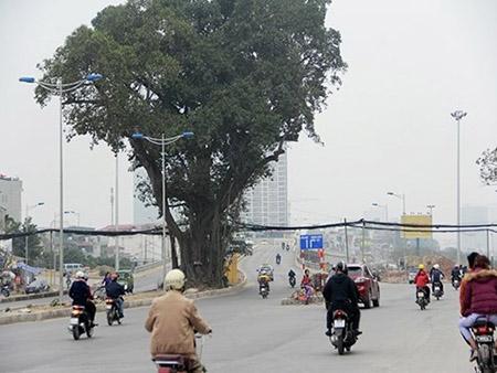 Cột điện bằng cọc tre trên đường nghìn tỷ ở Hà Nội - 4