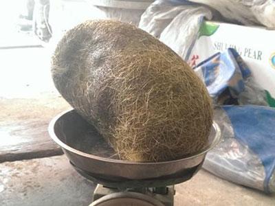 Hà Nội: Mổ heo ăn giỗ, phát hiện