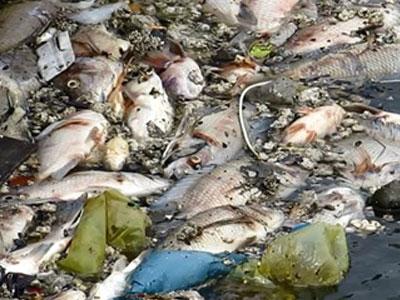 Nguyên nhân cá chết hàng loạt trên kênh Nhiêu Lộc – Thị Nghè