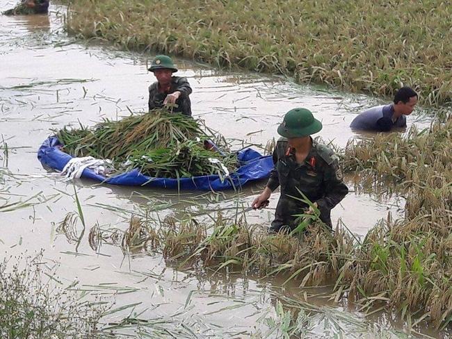 Hình ảnh đẹp: Khi những người chiến sĩ lội bùn, xuống đồng gặt lúa giúp dân - Ảnh 2.
