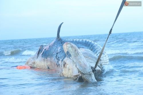 Cá voi chết ở Nghệ An: Ngư dân không ra biển, ở nhà làm lễ tang cá - Ảnh 2