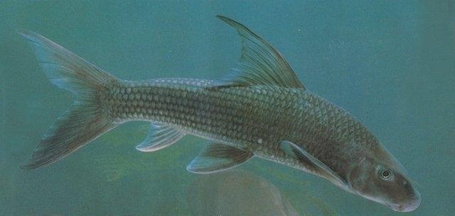 bảo tồn động vật hoang dã, thủy quái sông Đà, đại gia Hà Thành