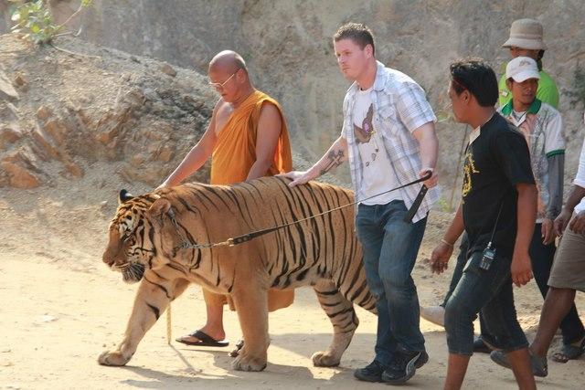 Ảnh: Sư Thái Lan ăn ngủ cùng 137 con hổ dữ - 5