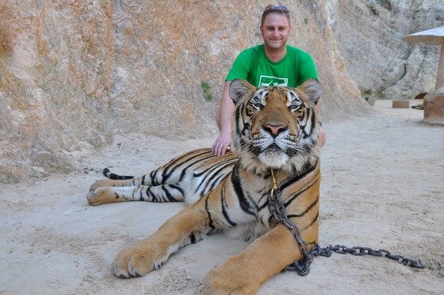 Ảnh: Sư Thái Lan ăn ngủ cùng 137 con hổ dữ - 6