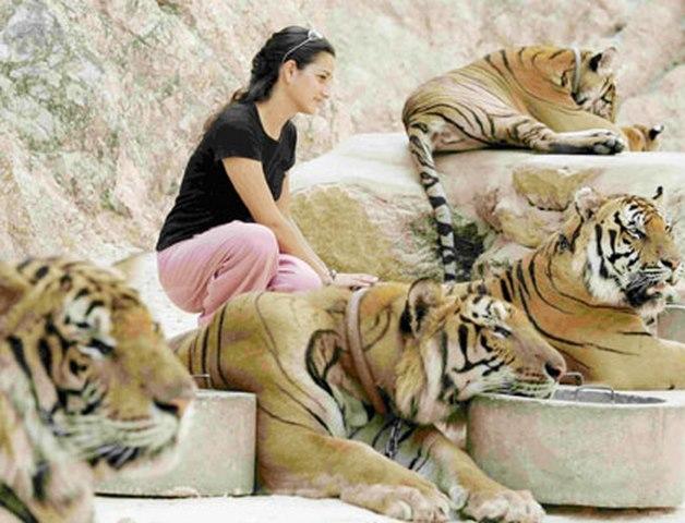 Ảnh: Sư Thái Lan ăn ngủ cùng 137 con hổ dữ - 11