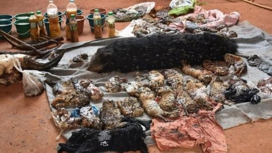 Phát hiện 40 xác hổ con trong chùa Thái Lan - Ảnh 2.