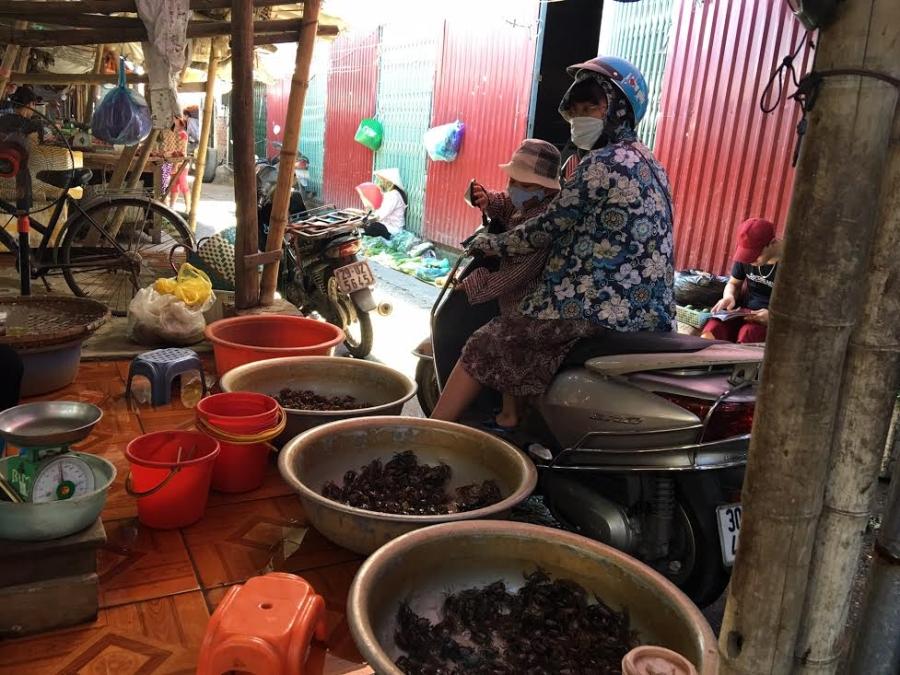 cua đồng, cua đồng ế ẩm, nắng nóng, cua đồng ế ẩm tại chợ, xếp hàng mua cua đồng
