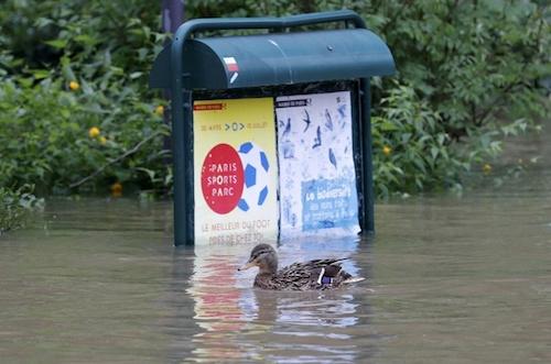 Ảnh: Thuyền bơi, vịt lội trên phố Paris - 14