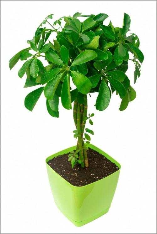 12 loại cây cảnh giúp thanh lọc độc tố trong không khí