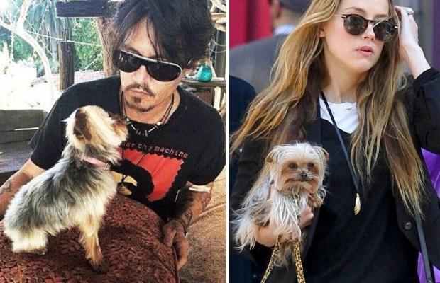 Johnny Depp tranh quyen nuoi cho cung voi vo tre hinh anh 1