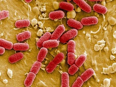 Xuất hiện siêu vi khuẩn kháng thuốc kháng sinh