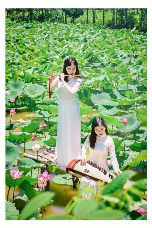 Thiếu nữ xinh đẹp bên cánh đồng hoa sen khiến triệu người mê đắm - Ảnh 2