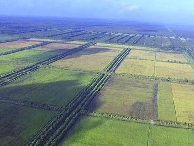 Dự án gạo hữu cơ đầu tiên của Việt Nam bị rao bán