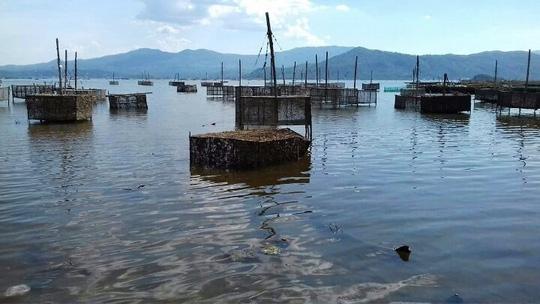 Cách đây ít ngày, trong quá trình nuôi hải sản, khi lặn xuống biển, người dân phát hiện một dòng nước màu đen