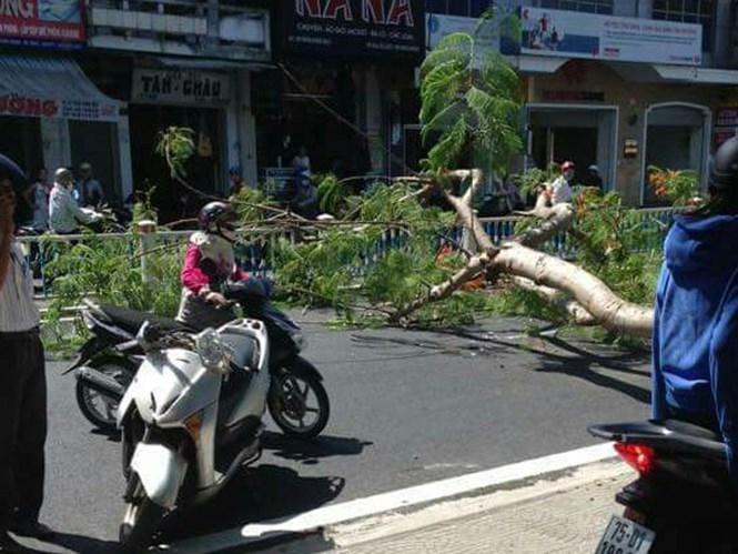 Hiện trường vụ cây ngã đổ và chiếc xe máy bị nát phần đầu /// Ảnh: CTV