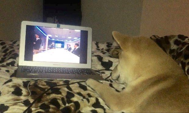 Chú chó shiba ngồi trên ghế xem phim như người - Ảnh 2.