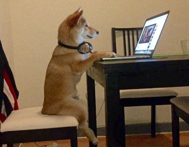 Chú chó shiba ngồi trên ghế xem phim như người - Ảnh 4.