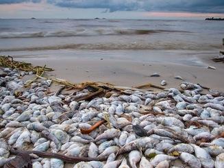 Đề nghị Chính phủ báo cáo Quốc hội về vụ cá biển chết
