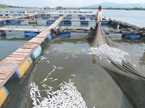 14 doanh nghiệp bị kiện vì xả thải làm cá chết hàng loạt - ảnh 1