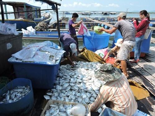 14 doanh nghiệp bị kiện vì xả thải làm cá chết hàng loạt - ảnh 2