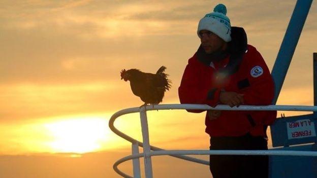 Cô gà mái 2 năm lênh đênh trên đại dương - 3