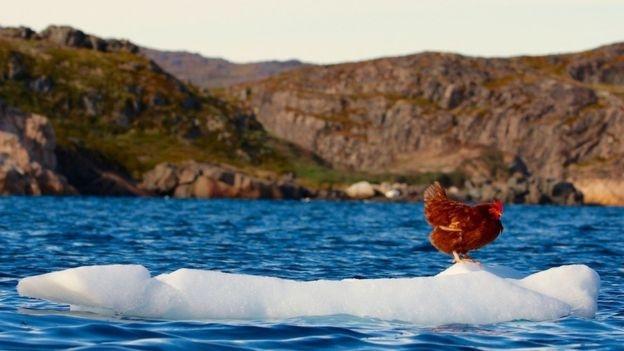 Cô gà mái 2 năm lênh đênh trên đại dương - 7