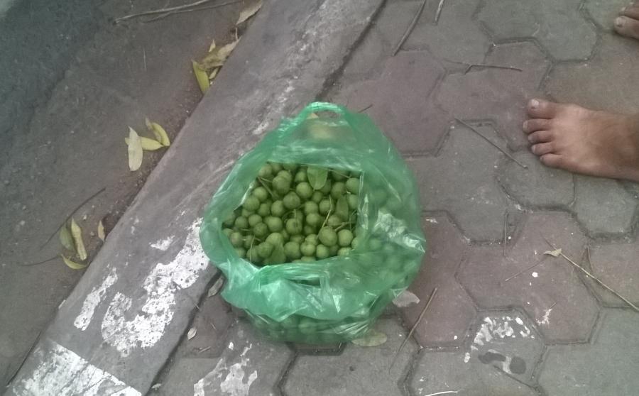 Cận cảnh nhũng chùm sấu non vừa được hái trên cây xuống và được bán trên phố Trần Phú, Hà Nội