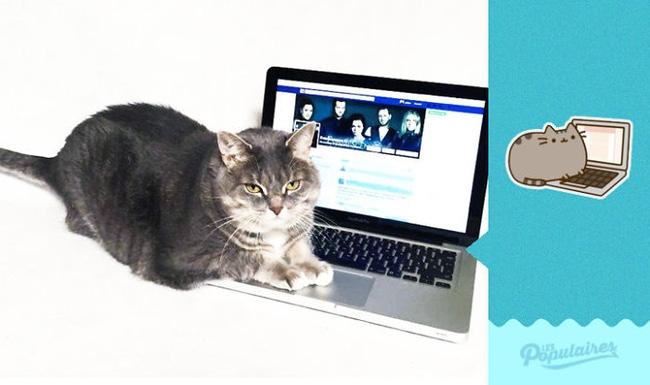 Đã tìm thấy chú mèo béo Pusheen phiên bản đời thực - Ảnh 4.