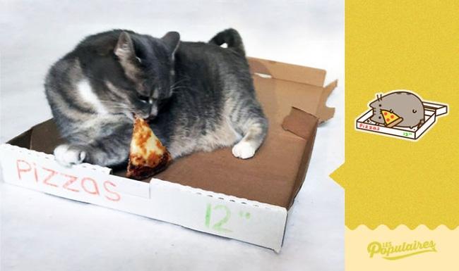 Đã tìm thấy chú mèo béo Pusheen phiên bản đời thực - Ảnh 5.