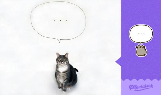 Đã tìm thấy chú mèo béo Pusheen phiên bản đời thực - Ảnh 6.