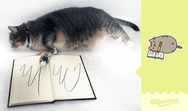 Đã tìm thấy chú mèo béo Pusheen phiên bản đời thực - Ảnh 7.