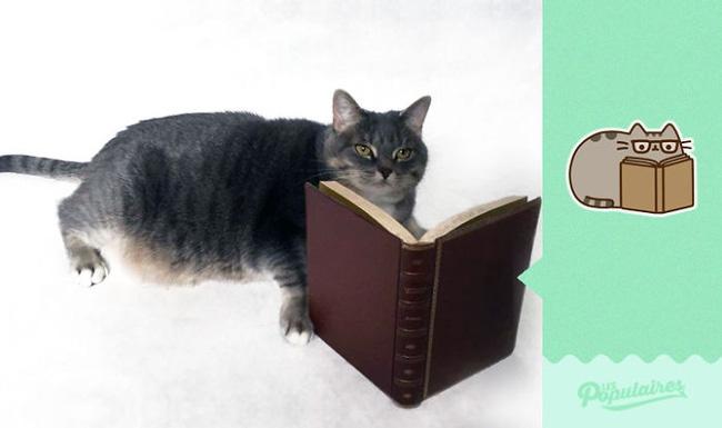 Đã tìm thấy chú mèo béo Pusheen phiên bản đời thực - Ảnh 8.