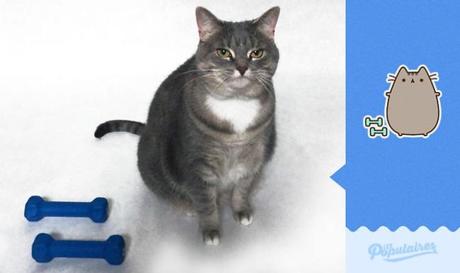 Đã tìm thấy chú mèo béo Pusheen phiên bản đời thực - Ảnh 9.